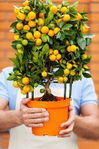 scelta frutteto in terrazzo