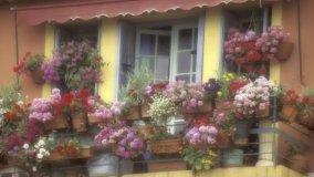 Piante profumate in balcone