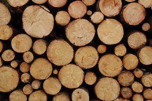 Curvare il legno tipi di legno