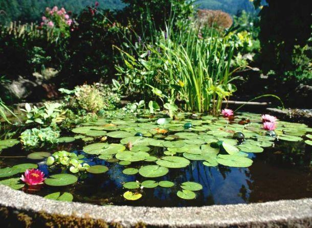 Foto di giardino acquatico