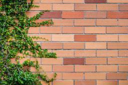 piante rampicanti su muro