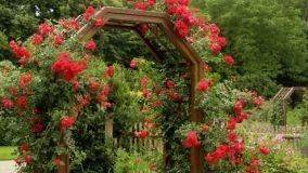 Arco fiorito in giardino