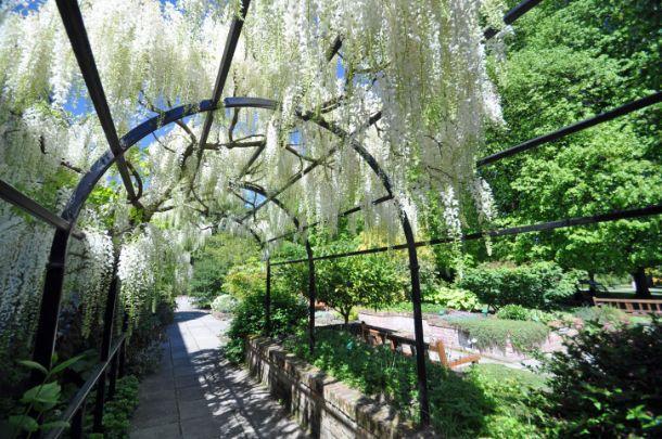fiori da giardino giardino fiorito : Terrazzo Con Fiori : Arco fiorito in giardino