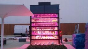 Vertical farm: la coltivazione verticale nei grattacieli