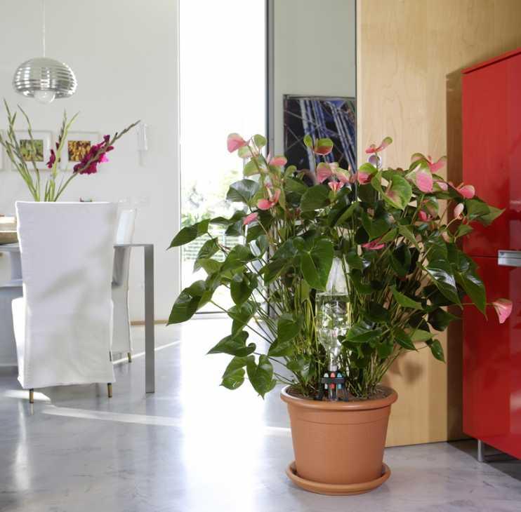 Irrigazione a goccia per le piante in vaso con il sistema Idris