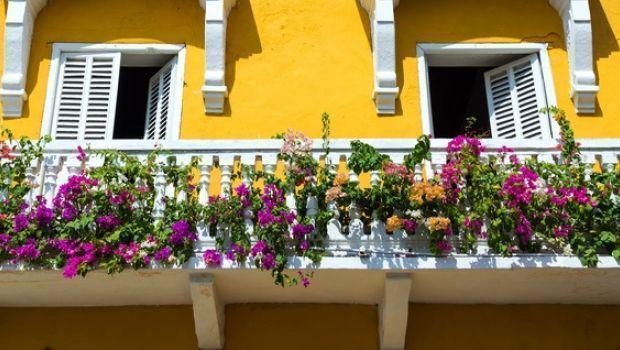 Come scegliere le piante da fiore