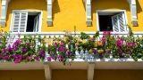 Piante da fiore: come sceglierle