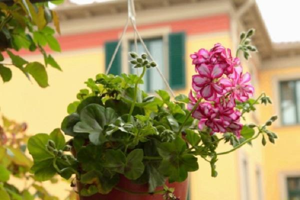 Piante da fiore come sceglierle - Porta piante aromatiche ...