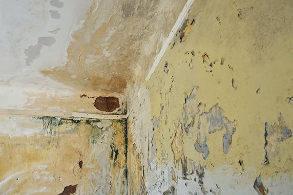 Pareti interne con gravi danni da umidità: muffe e disgregazione dell'intonaco.