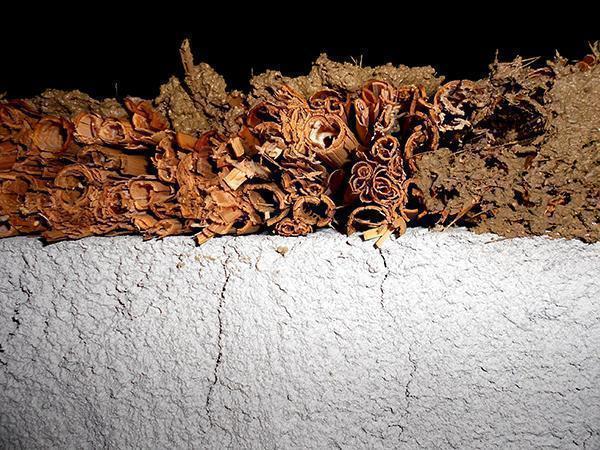 Intonaco in argilla su canna palustre. Foto: Luca Maioli architetto