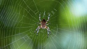 Come eliminare le ragnatele in casa