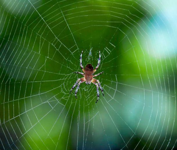 eliminare le ragnatele