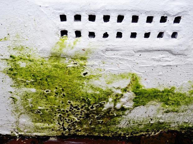Umidità nei muri: rigonfiamento e distacco dell'intonaco