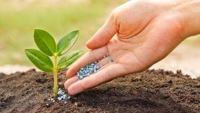 Concimi e fertilizzanti organici