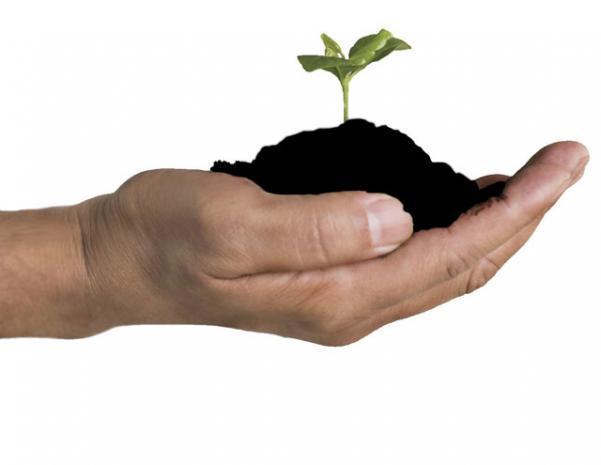 Compost, concime organico