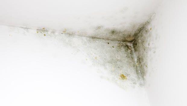 Spray per eliminare la muffa in casa - Muffa nella doccia ...