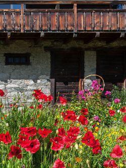 Riqualificazione giardini: Ecobonus