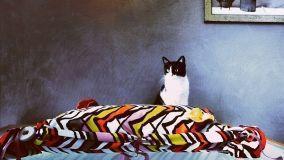 Consigli utili per realizzare degli originali cuscini fai da te