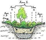 Elementi di progettazione del giardino - Schema di funzionamento del Raingarden