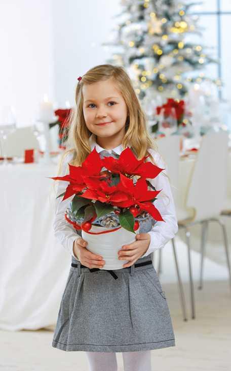 Stella di Natale da regalare