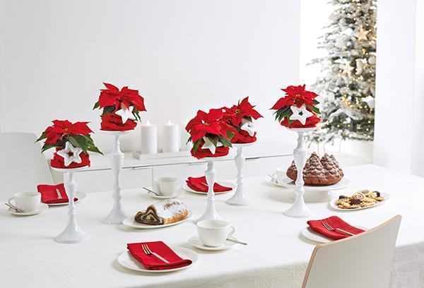 Stella di Natale per le decorazioni al tavolo