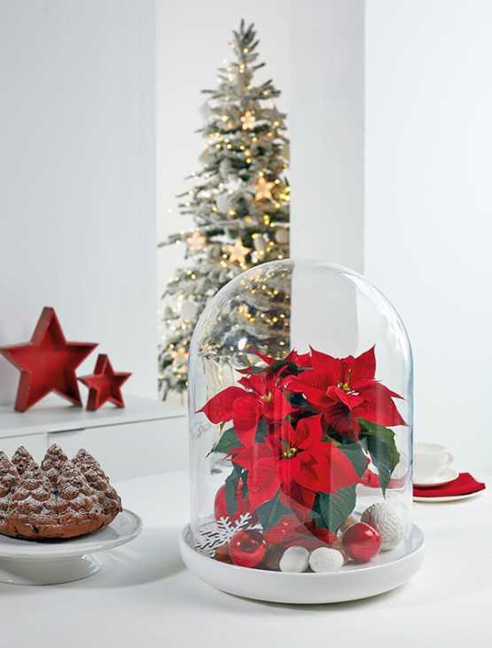 Stella di Natale decorativa