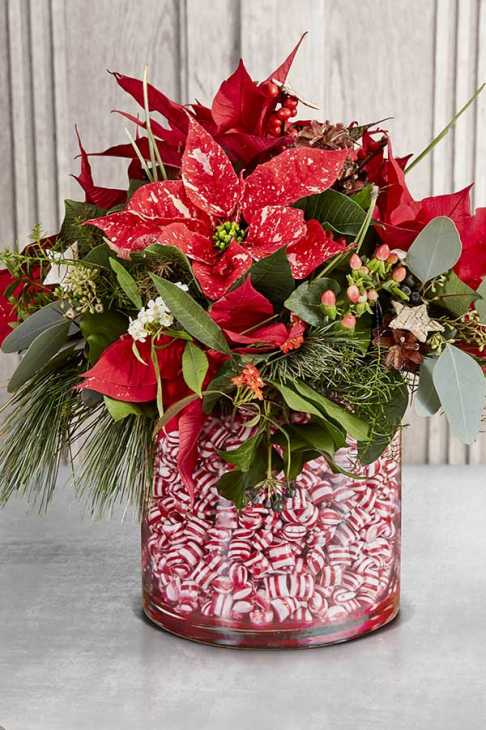 Vaso di Poinsettia e caramelle