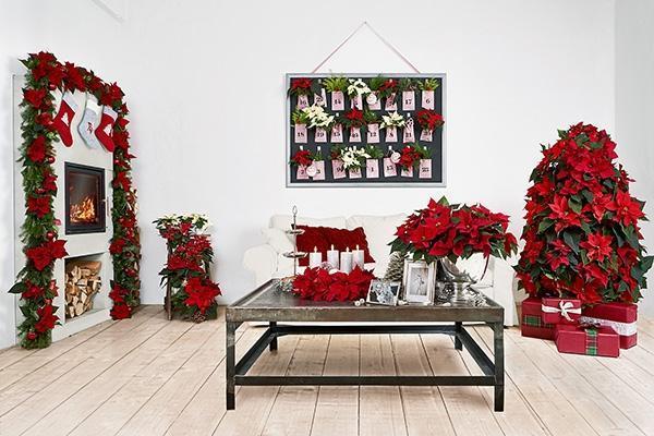 Stella di natale come usarla per le decorazioni natalizie for Decorare la camera per natale