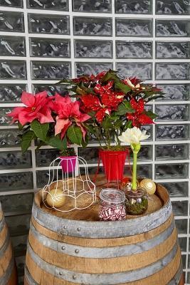 Stella di Natale in tavola