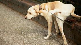 Parti condominali, cani e bisogni fisiologici