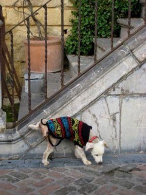 Un cane che espleta i bisogni fisiologici