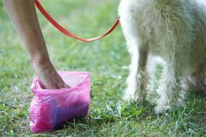 Rimozione degli escrementi di animali domestici