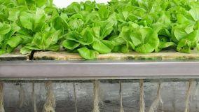 La coltivazione aeroponica: cos'è e quali sono i vantaggi