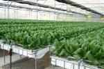 Parete di coltivazione idroponica