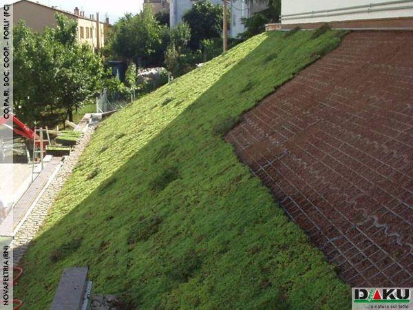 Coperture verdi per tetti di Daku