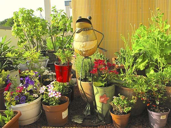 Lavori in giardino a febbraio