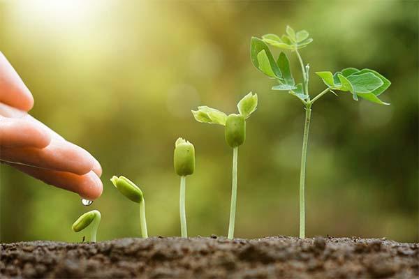Nuove  semine per i lavori di giardinaggio a febbraio