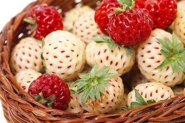 Cesto di fragole bianche e fragole rosse