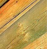 I colori del legno trattato