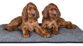 Tappeti e materassini per animali domestici da usare in casa