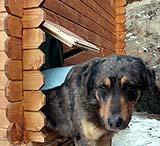 Casetta da giardino con ngresso a parete per animali