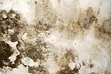 Muffa sui muri di casa