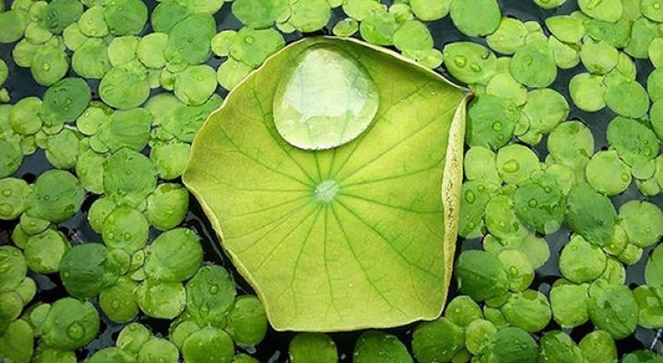 Nanotecnologia pianta loto