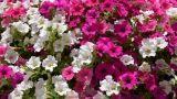 Scegliere i fiori in casa, terrazzo e giardino