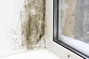 La muffa è una tipica manifestazione dell'umidità di condensa.