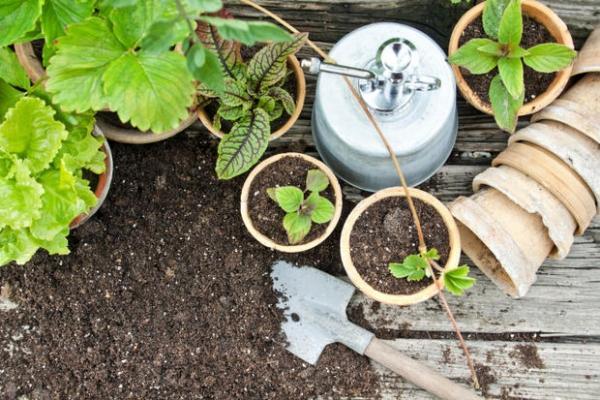 Vasi in giardino