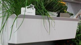 Idee originali per indicare la semenza piantata in vaso o nell'orto con dei segnapiante