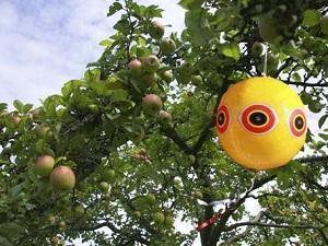 Palloni scaccia uccelli in spazio aperto