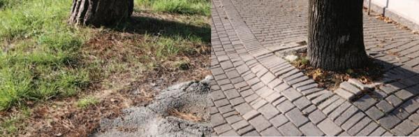 Danni provocati dalle radici degli alberi di Pontanarolo Engineering