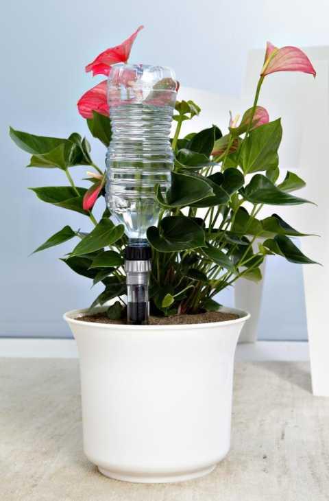 Idris Spike irrigazione piante rampicanti in vaso
